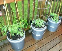 container garden vegetables. Starter Vegetable Garden Design For Beginners Container Gardening Vegetables Courses E