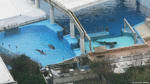 original shamu. Contemporary Shamu Orcas In Tanks At SeaWorld Orlando 2010 To Original Shamu
