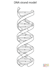 Small Picture DNA Strand Model coloring page Free Printable Coloring Pages