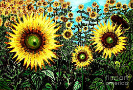 van painting van goghs field of sunflowers by aisa mijeno