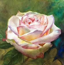 watercolor painting of a beautiful white pink rose