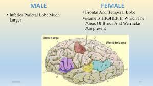 male brain vs female brain 26 01 2016 16 17