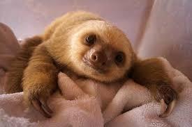 cute amazon rainforest animals. Cute Amazon Rainforest Animals In