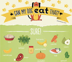 What Can Dogs Eat Chart Chart Can My Dog Eat That Designtaxi Com
