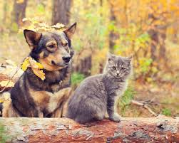 cats and dogs playing. Interesting And Cat And Dog In Forest Autumn Inside Cats And Dogs Playing O
