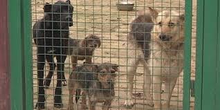 Rezultat slika za азил за псе у сомбору