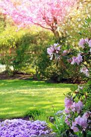 low maintenance landscaping plants for