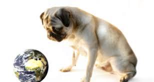 Wenn Der Hund Stirbt Was Ist Zu Tun Hunde