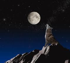 wolf howling at the moon. Modren Wolf Horizontal Photograph  Wolf Howling At Moon By John Lund Intended The L