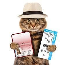 Image result for traveling cats