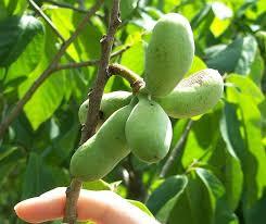 Buy Michigan Trees  MI Shade Tree Sale  Best Michigan Fruit TreeWhat Fruit Trees Grow In Michigan