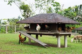 Stylish Chicken Coop Designs Chicken Coop Designs That Are Stylish Small Chicken Coops