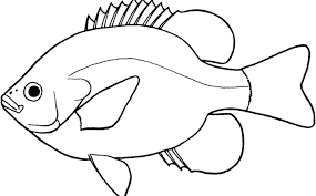 fish clipart black and white. Fine White Lovely Of Letter Master Gratify Outline Miraculous Fish Clipart Black And  White And Clipart Black White C