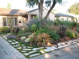 Drought Tolerant Front Yard Landscape Design Plantworld Before And After Photos Alamo Residence