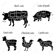 Cow Butcher Chart Vector Illustration Lamb Goat Chicken Cow And Pork Cuts Diagramm
