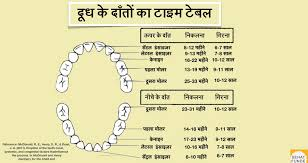 Teething Chart Babies Teething In Babies And Teething Timeline In Hindi Sehat Funde