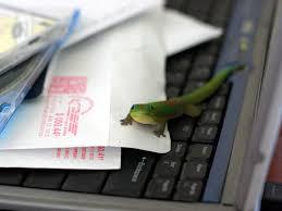 geico hawaii office. Geico Geckos Taking Over The Big Island Of Hawaii Office