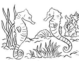 Small Picture Seahorse Coloring Page Samantha Bell