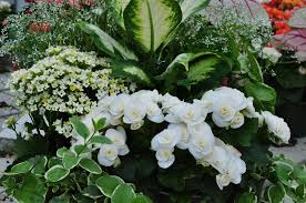 Gardening For Breast Cancer U2013 Shade Container Recipes U2013 Breast Container Garden Ideas For Shade