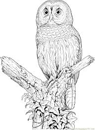 Perched Barred Owl Coloring Page Free