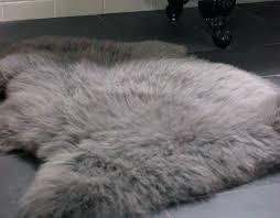 slate grey sheepskin rug sheep skin costco