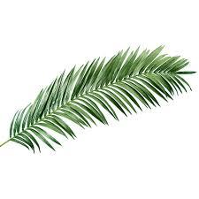 Feuille Palmier Blog Pinterest Feuille Palmier Palmiers Et