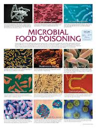 Microbiology Wall Charts Teaching Supplies Classroom Safety
