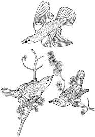 Bird Coloring Pages For Adults Jokingartcom