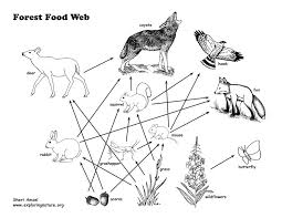 food_web_text72 grade 6 8 ms ls2 ecosystems interactions, energy, and dynamics on food web worksheet pdf