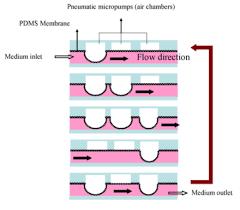 Peristaltic Pump Tubing Size Chart Peristaltic Pump Wikiwand