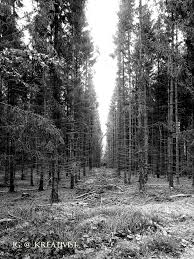 forest nature dead trees monochrome hd wallpaper desktop background