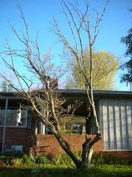 need advice on this dogwood tree grow