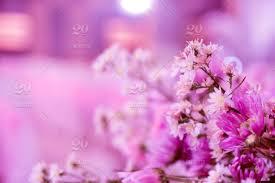 Pink Flower On Beauty Background Design For Wedding