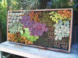 view in gallery combine different colors of succulents to get a more vibrant look on live succulent wall art with cool diy green living wall projects for your home