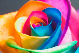 the meaning behind flower colors