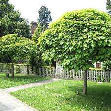 Image result for images of a tree in a garden