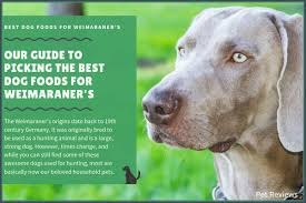 11 Best Highest Quality Dog Foods For Weimaraners In 2019