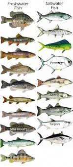 Freshwater Fish Chart This Is A Great Idea Fishingforbeginners Fish Chart
