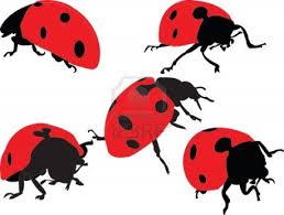 En Couleurs Imprimer Animaux Insectes Coccinelle Num Ro 91899