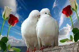 Beautiful Wallpapers Love Birds