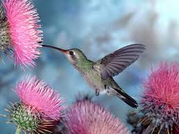 images of flowers and birds.  And Flowers And Birds Background Throughout Images Of I