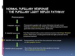 Amaurotic Light Reflex