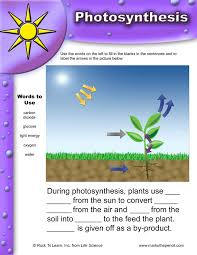 photosynthesis diagram | Free Practice Science Tests & Test-Taking ...