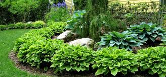 Small Picture Images About Hosta Garden Ideas On Pinterest gambartopcom