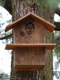 awesome squirrel house plans free remarkable 36 x 24 with loft 12 cabin floor