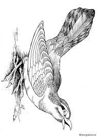 Vogels Kleurplaat 384901 Kleurplaat