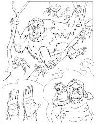 Small Picture Orangutan Coloring Pages Miakenasnet