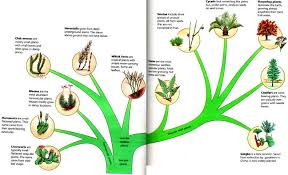 explain this diagram of the classification of plants