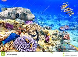 Underwater World With Corals And Tropical Fish Stock Image Image