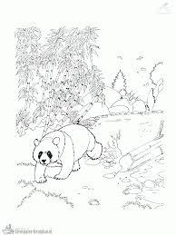 Kleurplaten Panda Kleurplaten Kleurplaatnl